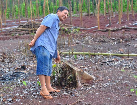 NÓNG: Lại cảnh báo việc nông dân đào rễ hồ tiêu bán sang Trung Quốc - 2