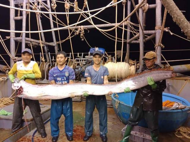 Xôn xao clip dân bắt được cá hố khủng dài gần 4m, nặng 80kg