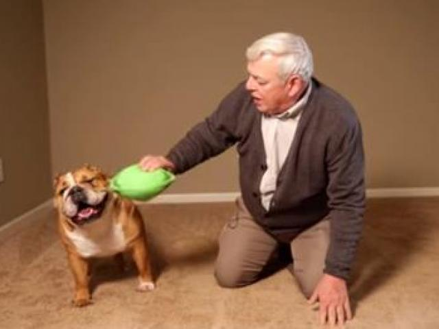 Cún cưng bỏ nhà theo người yêu, vô tình giúp chủ nhân thành triệu phú