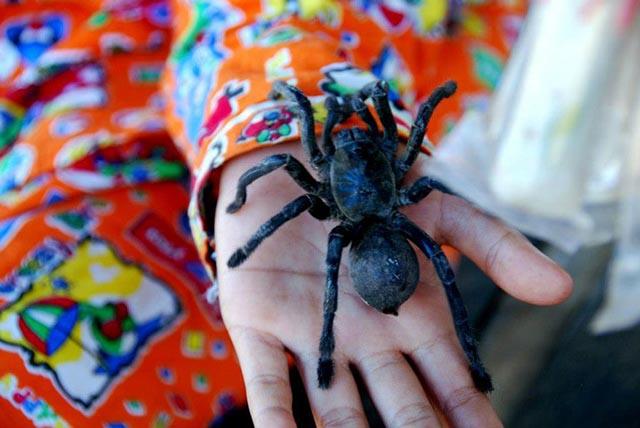 """""""Rùng mình"""" nhện độc chiên lại là món ăn vặt phổ biến ở Campuchia - 1"""