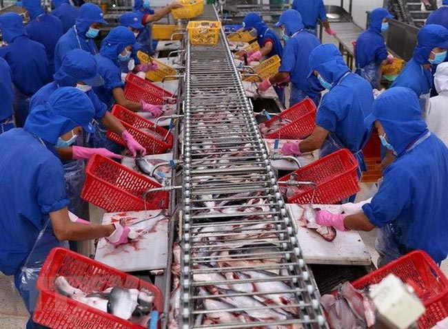 Doanh nghiệp thủy sản xoay xở biến da cá, mỡ cá thành tiền - 2