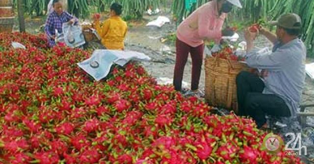 Trung Quốc sẽ xả kho dự trữ, hạt gạo Việt gặp khó