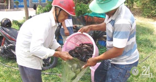 """Độc đáo: Thâm nhập vào làng """"du mục"""" nuôi cá phóng sinh ở Sài thành"""