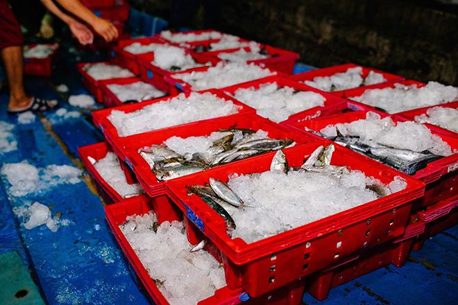 Hành trình chưa đầy 48h từ cảng biển tới bàn ăn của cá biển tại Bách hóa Xanh - 2