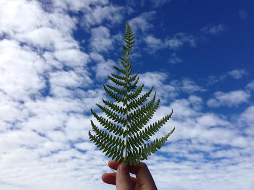 Y Tý - biển mây bồng bềnh đẹp hút hồn dân phượt - 7