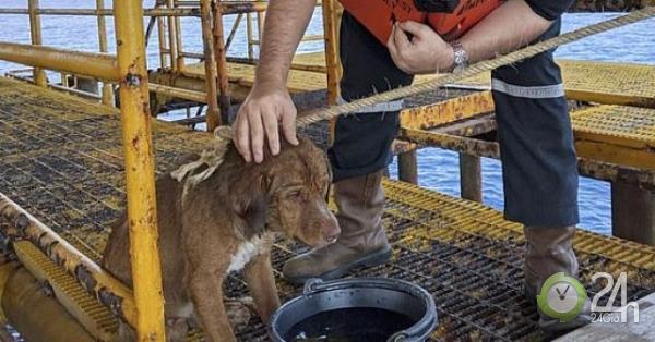 Chú chó bí ẩn xuất hiện tại dàn khoan dầu cách bờ 220km