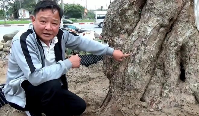 """""""Bác sĩ"""" tiết lộ bí quyết cứu cây cổ thụ bạc tỷ - 1"""