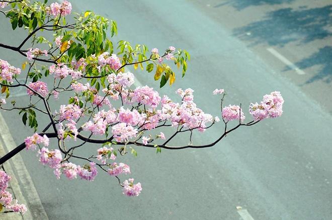 """Người dân """"rủ nhau đi trốn"""", đường phố Sài Gòn yên bình, thông thoáng đến lạ - 11"""