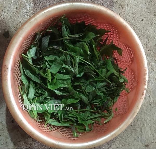 Thứ rau rừng xào trứng đen sì - đặc sản xứ Mường cuốn hút du khách - 1