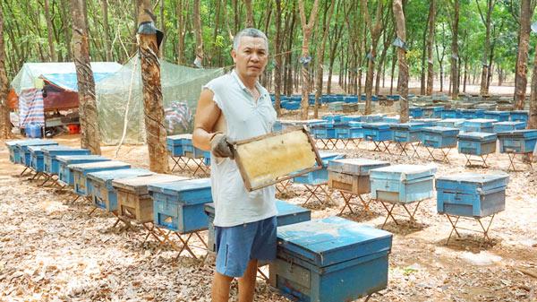 Mùa ong di cư lớn nhất: Bỏ vợ con đi theo mùa hoa, kiếm trăm triệu - 4