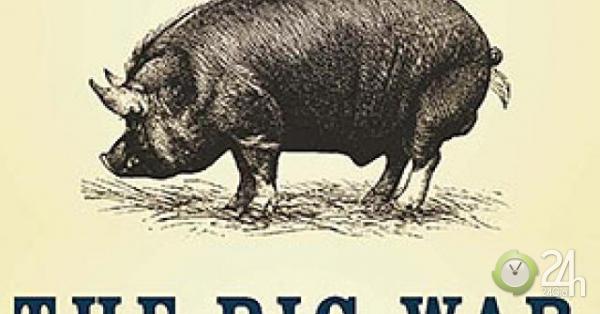 Con lợn ham ăn suýt thổi bùng chiến tranh giữa Anh và Mỹ