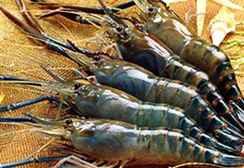Cách chọn hải sản tươi ngon, ai cũng nhất định phải biết - 2