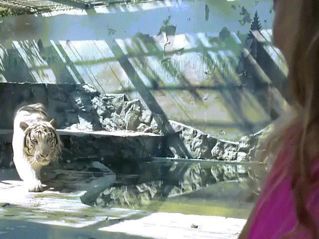 """Những khoảnh khắc khiến du khách """"đứng tim"""" trong sở thú"""