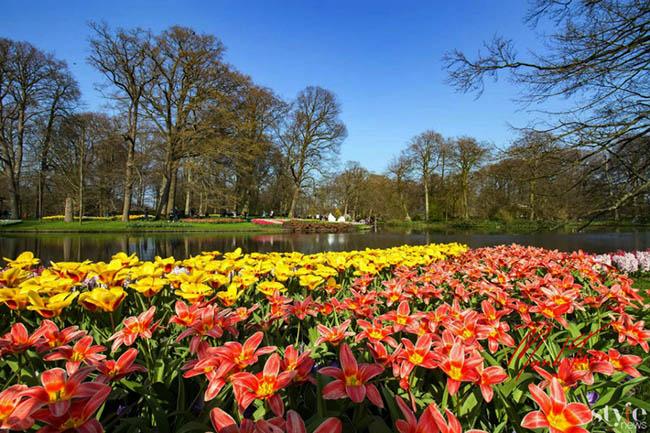 """Vẻ đẹp mê hoặc của """"khu vườn cổ tích"""" Keukenhof tại Hà Lan - 3"""