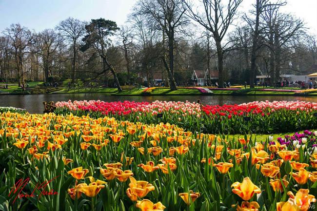 """Vẻ đẹp mê hoặc của """"khu vườn cổ tích"""" Keukenhof tại Hà Lan - 6"""