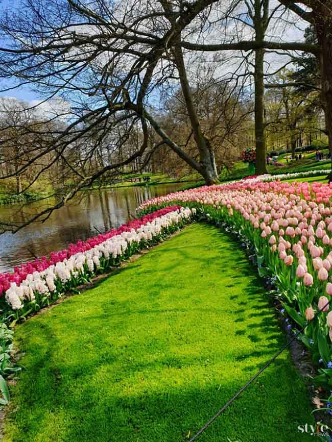 """Vẻ đẹp mê hoặc của """"khu vườn cổ tích"""" Keukenhof tại Hà Lan - 7"""