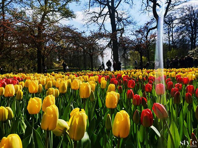 """Vẻ đẹp mê hoặc của """"khu vườn cổ tích"""" Keukenhof tại Hà Lan - 9"""
