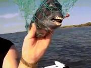 Phát hiện loài cá lạ có hàm răng đều tăm tắp giống y con người