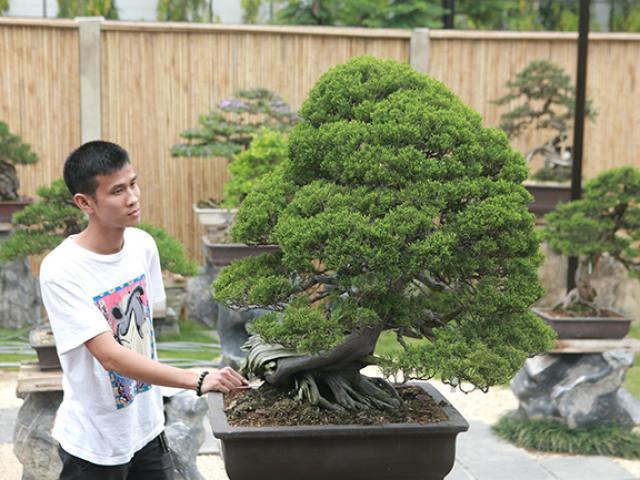 Choáng ngợp vườn bonsai Nhật tiền tỷ giữa đất Bắc Giang