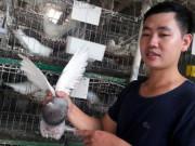 Anh thợ sửa ôtô đam mê nuôi chim, mỗi tháng lãi 15-20 triệu đồng