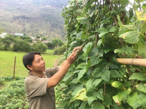 Chỉ trồng rau tầm bóp dại và vài loài rau ăn lá mà thu tiền rất khá - 3
