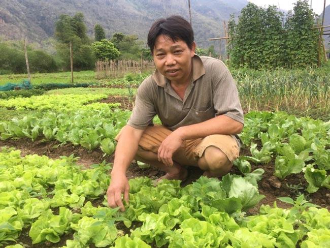 Chỉ trồng rau tầm bóp dại và vài loài rau ăn lá mà thu tiền rất khá - 5
