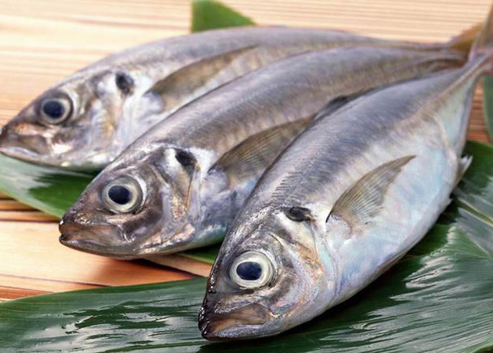 Các loại cá có khả năng chống lão hóa da