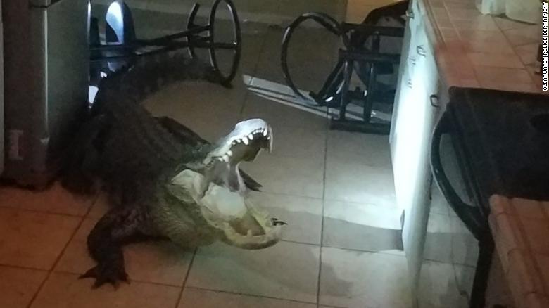 Sáng tỉnh giấc, hoảng hồn thấy cá sấu dài 3 mét nằm rình trong nhà - 1