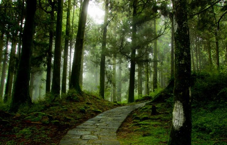 Lạc vào mộng cảnh bởi những khu rừng khó tin nhưng có thật - 7