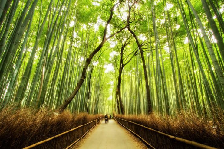 Lạc vào mộng cảnh bởi những khu rừng khó tin nhưng có thật - 8