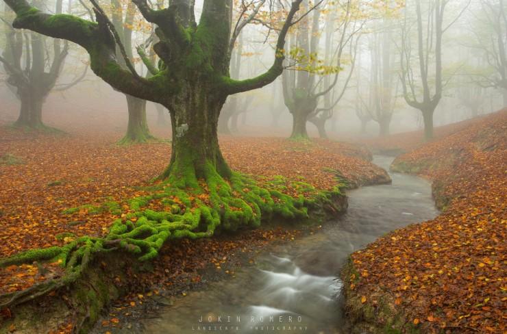 Lạc vào mộng cảnh bởi những khu rừng khó tin nhưng có thật - 6