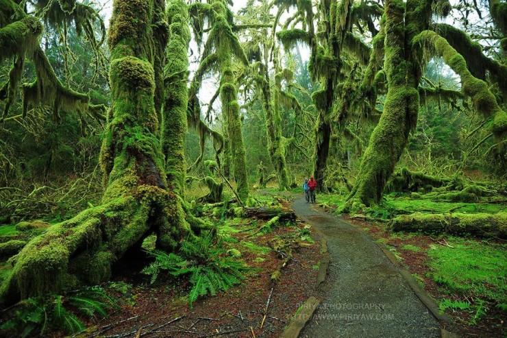 Lạc vào mộng cảnh bởi những khu rừng khó tin nhưng có thật - 9