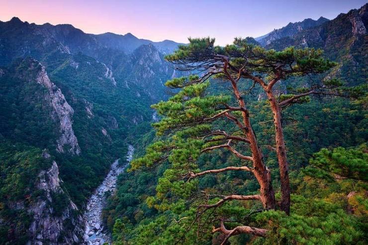 Lạc vào mộng cảnh bởi những khu rừng khó tin nhưng có thật - 10