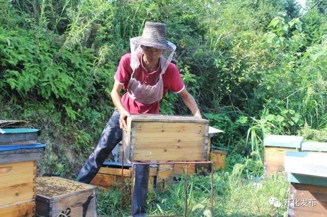 """Không tìm được việc, chàng trai về quê nuôi ong kiếm vài trăm triệu """"ngon ơ"""" - 3"""