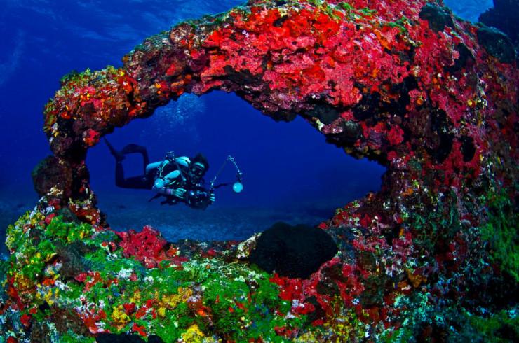Những thế giới ngầm kỳ bí dưới đáy đại dương - 8