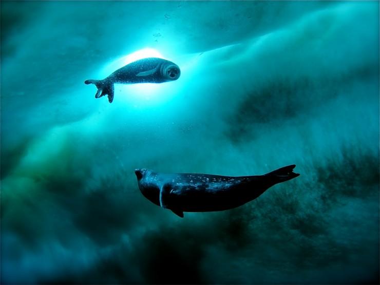 Những thế giới ngầm kỳ bí dưới đáy đại dương - 7