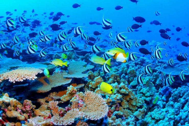 Những thế giới ngầm kỳ bí dưới đáy đại dương - 10