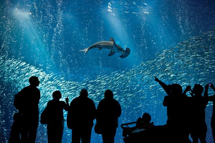 Những thế giới ngầm kỳ bí dưới đáy đại dương - 6