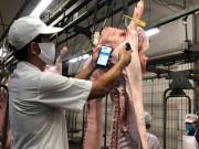 Nhập khẩu thịt tăng 6,7%: Không quản, Việt Nam thành bãi rác thịt nhập