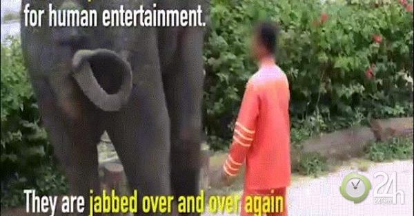 Du khách TQ đổ xô đến vườn thú bạo hành động vật ở Thái Lan-Thế giới