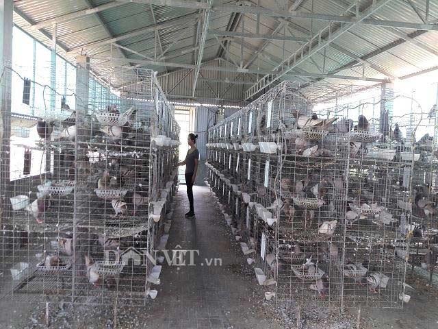 Hà Tĩnh: Xây lầu cho chim ở, mỗi tháng bỏ túi hơn 20 triệu đồng - 1