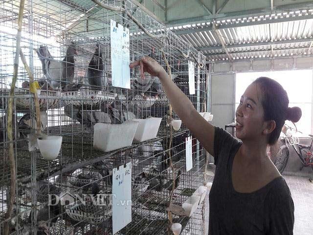 Hà Tĩnh: Xây lầu cho chim ở, mỗi tháng bỏ túi hơn 20 triệu đồng - 2