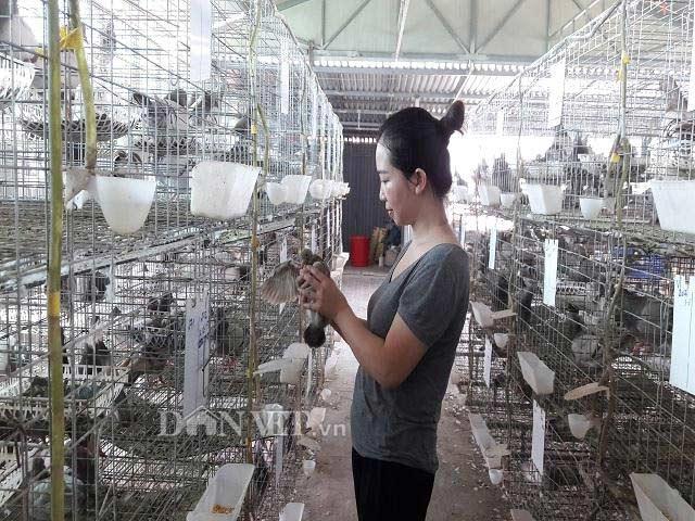 Hà Tĩnh: Xây lầu cho chim ở, mỗi tháng bỏ túi hơn 20 triệu đồng - 3