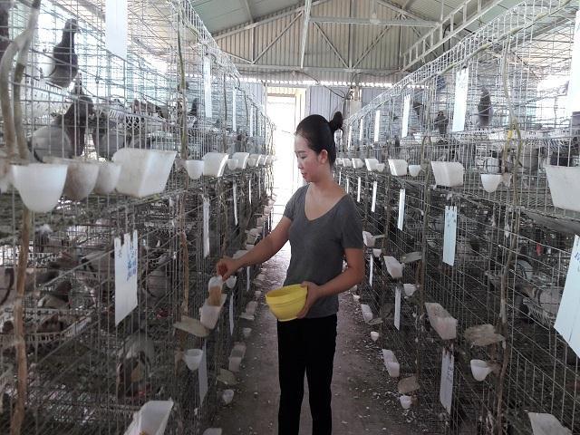 Hà Tĩnh: Xây lầu cho chim ở, mỗi tháng bỏ túi hơn 20 triệu đồng - 5