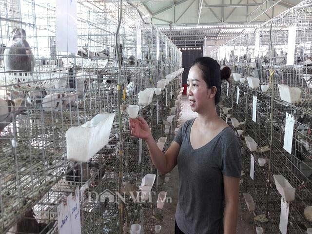Hà Tĩnh: Xây lầu cho chim ở, mỗi tháng bỏ túi hơn 20 triệu đồng - 6