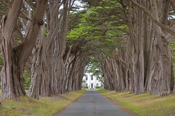 Rừng cây đan kín tạo thành đường hầm bí ẩn giữa lòng nước Mỹ - 3
