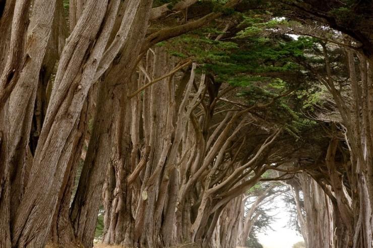 Rừng cây đan kín tạo thành đường hầm bí ẩn giữa lòng nước Mỹ - 4