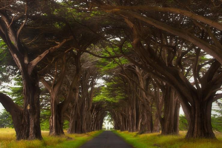 Rừng cây đan kín tạo thành đường hầm bí ẩn giữa lòng nước Mỹ - 2