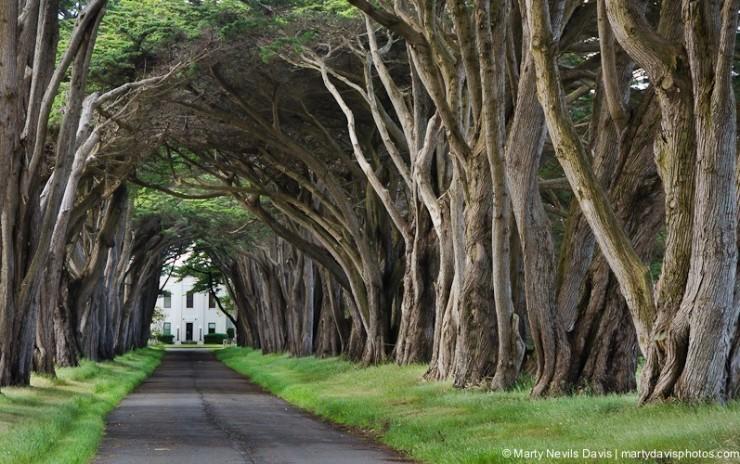Rừng cây đan kín tạo thành đường hầm bí ẩn giữa lòng nước Mỹ - 6