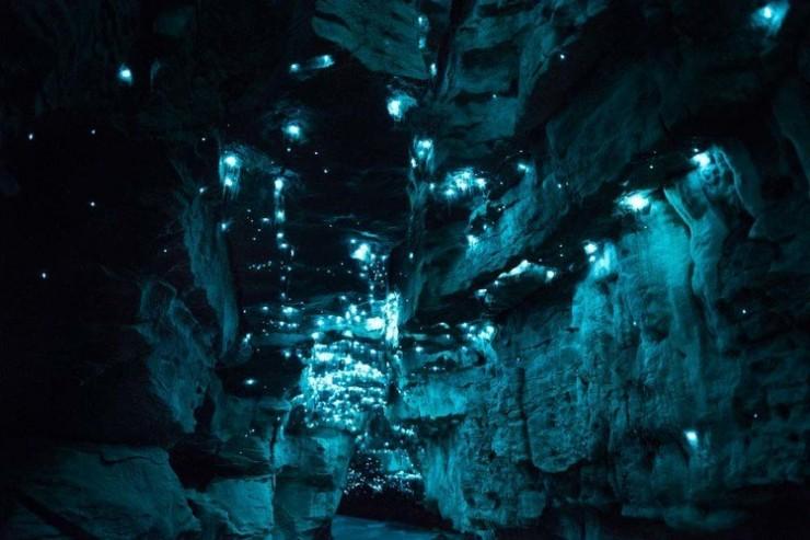 Hang động kỳ ảo nhất New Zealand khiến du khách trố mắt - 3
